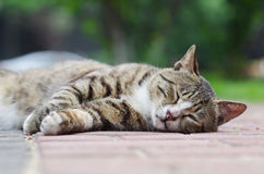 Tabby cat sleep. On road stock images