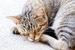 A tabby cat sleep. A tiger (tabby) cat relaxing and sleep on floor royalty free stock image