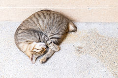 A tabby cat sleep. A tiger (tabby) cat relaxing and sleep on floor royalty free stock images