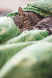 Tabby cat sleeping on a bed royalty free stock photos