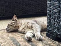 Tabby Cat Sleeping en una manta del yute fotos de archivo