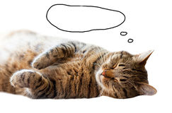 Tabby cat sleeping on the floor while lying on his back. Painted a cloud labeling. Royalty Free Stock Image