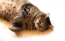 Tabby cat sleeping on the floor lying on its side. Cat sleeping on the floor lying on its side royalty free stock images