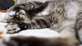 Tabby Cat Sleeping with her Hand. Blindfolded Stock Image