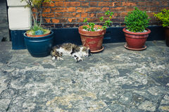 Tabby cat sleeping by potted plant outside Stock Photos