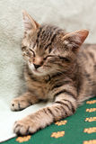 Tabby cat sleeps on bed Royalty Free Stock Images