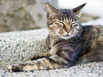 Tabby cat with sleepy face Royalty Free Stock Photo