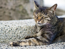 Tabby cat with sleepy face Stock Photos