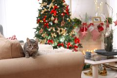Tabby cat on sofa in beautiful living room decorated. For Christmas Stock Photo