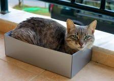 Tabby Cat som sover i en ask av skor arkivfoton