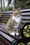 Tabby Cat Staring. Tabby Cat on park bench Staring Royalty Free Stock Photography
