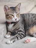A tabby cat staring to something Stock Image
