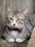 A tabby cat staring to something Stock Photo