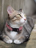 A tabby cat staring to something Stock Images