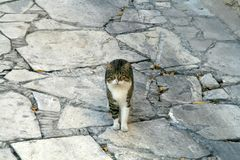 Tabby cat staying on a paved ground stock photography