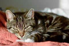Tabby cat in sun puddle on bed Stock Photo