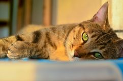 Tabby cat in the sun. ,look at the camera stock photos