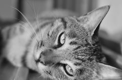 Tabby cat in the sun. ,look at the camera stock photography