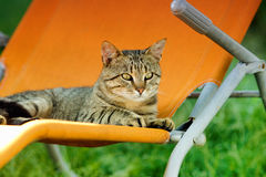 Tabby cat on sunbed Royalty Free Stock Photography