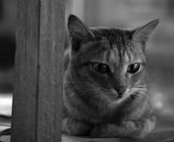 TABBY CAT SUR LA CHAISE EN BOIS Photo stock