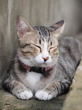 A tabby cat take a nap on the floor. A cute tabby cat lay down on the floor and close his eyes Stock Photo