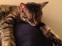 Tabby Cat Takes en ta sig en tupplur Royaltyfri Fotografi