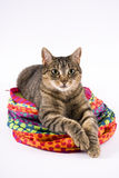 Tabby cat on toy Royalty Free Stock Image