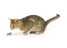 Tabby cat and toy mouse Royalty Free Stock Photography