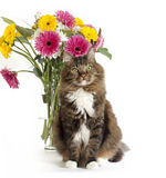 Tabby Cat with Vase of Flowers Royalty Free Stock Photography