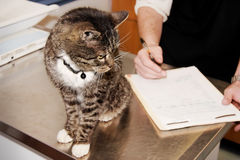 Tabby Cat the Vet. Tabby cat checking his medical chart with veterinarian. Horizontal Royalty Free Stock Photography
