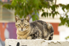 Tabby cat. In the wall Royalty Free Stock Photos