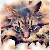 Tabby cat in water colour paint. Digital watercolour painting of a close-up of a tabby cat resting and relaxing Stock Images