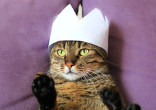 Tabby cat wearing a paper crown Stock Image