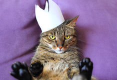 Tabby cat wearing a paper crown Stock Photo