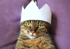 Tabby cat wearing a paper crown Royalty Free Stock Photos