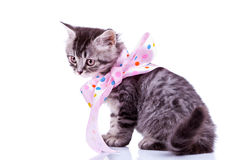 Tabby cat wearing a pink ribbon Stock Photos