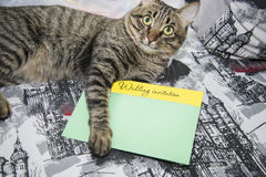 Tabby cat and wedding invitation. Tabby cat gives the wedding invitation Royalty Free Stock Images