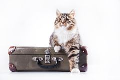 Tabby cat on a white background Stock Photos