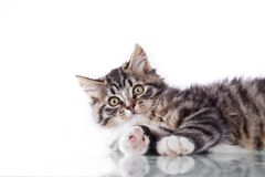 Tabby cat on a white background Royalty Free Stock Photos