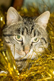 Tabby Cat and Yellow Tinsel Royalty Free Stock Images