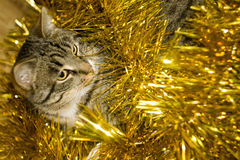 Tabby Cat and Yellow Tinsel Royalty Free Stock Image