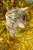 Tabby Cat and Yellow Tinsel Stock Photo