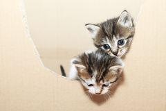 Tabby cats Stock Photos