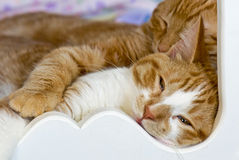 Tabby Cats Napping In Bed Royalty Free Stock Photo
