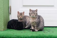 Tabby cats sitting on the ground in front of the house Stock Photos