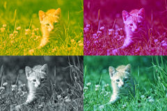 Tabby Collage royalty free stock photo