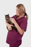 Tabby com veterinário Imagem de Stock Royalty Free