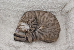 Tabby cuddling Stock Photos