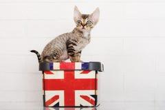 Tabby devon rex kitten sitting on a box Stock Photography