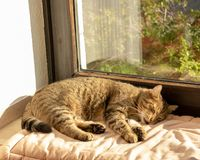 Tabby domestic cat is sleeping on the windowsill royalty free stock image